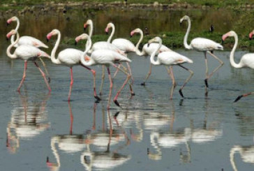 Centre decentralises management of wetlands; 'Wise Use' principle to widen ambit of permitted activities