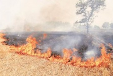 NGT asks states to be vigilant about crop burning