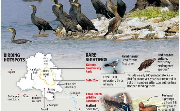 Migratory birds return to their favourite haunts
